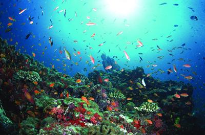 保护祖国丰富的海洋生物资源?