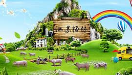 江苏梅林百万小猪的快乐养殖:锐捷智慧无线记录小猪成长每一步